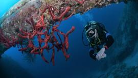 Bundles Easydivers dive center