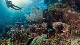 Marine ecology easydivers dive center albufeira