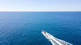 Dolphin search_passeio de golfinhos albufeira algarve